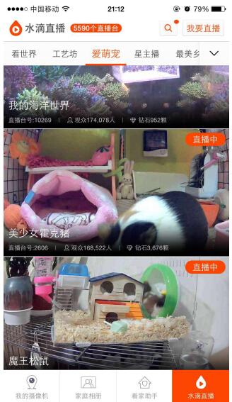 澳宠物猫爆红 小水滴24小时纪录萌宠可爱瞬间